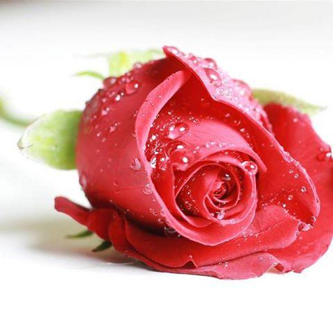 Салон За Красота RED ROSE